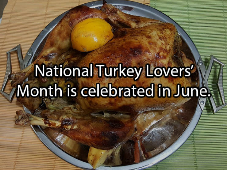 These Turkey Facts Are Not Cold At All