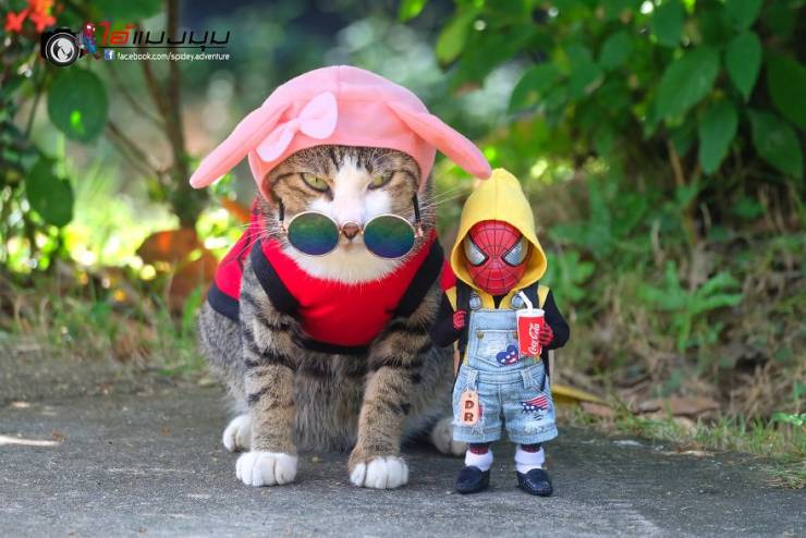 Adventures Of Baby Spiderman Among Cats