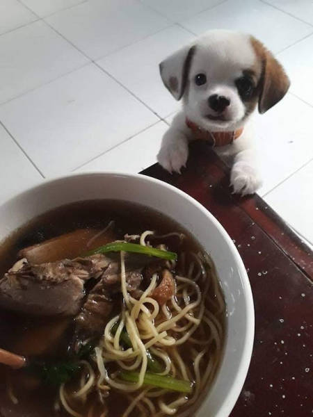 Stop Looking At My Food Like That!