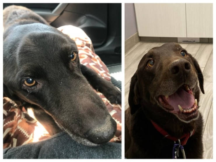 You Can't Just Look At Dogs Before And After Adoption Without Feeling Anything