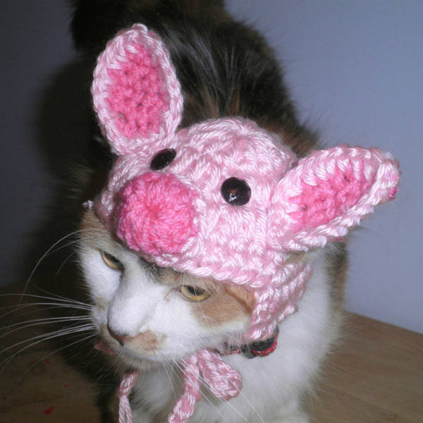 Crocheted Pet Hats Are The Best!