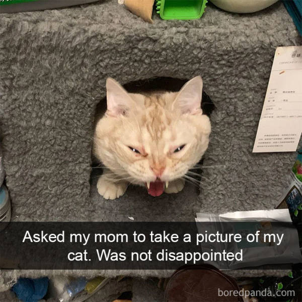 Amusing Cat Snapchats That Will Leave You With The Biggest Smile