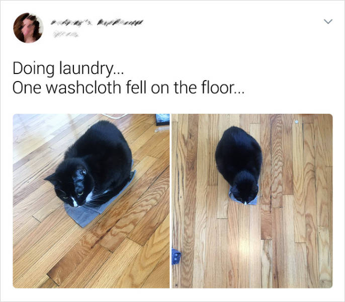 Cats Are The Masters Of Comedy