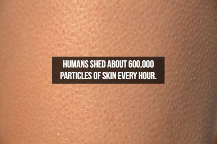 Mind-Boggling Facts About Human Bodies