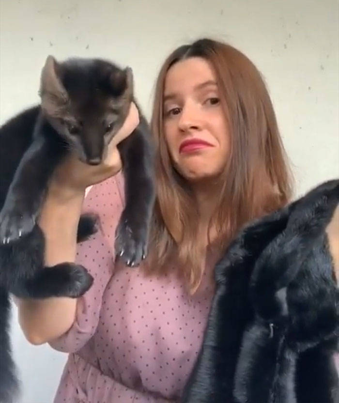 Russian Woman Saves A Sable Who Was About To Become Someone's Coat, Decides To Keep It As Her Pet