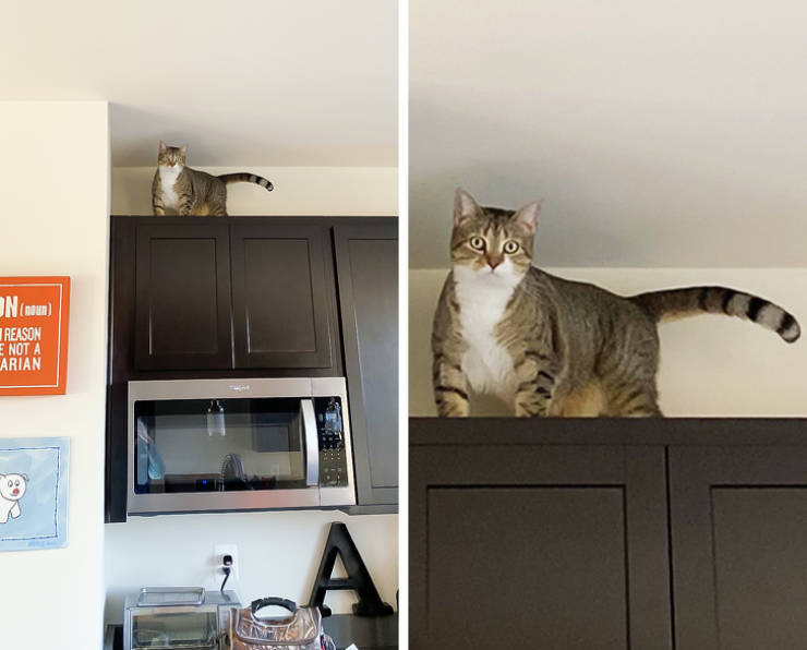 """Cats Don't Care About Their """"Roommates"""""""