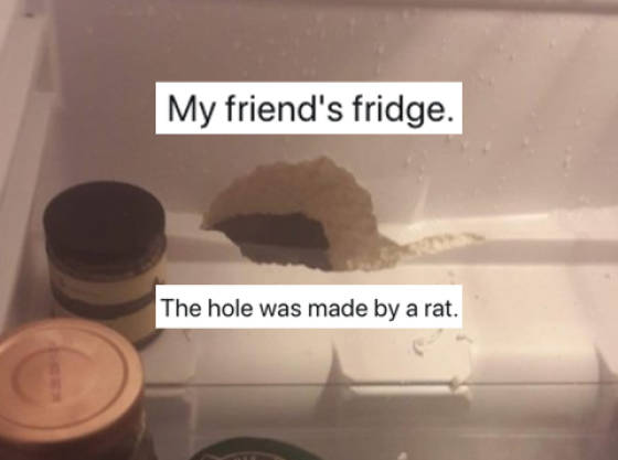 People Show Just How Bad Rented Apartments Can Get…
