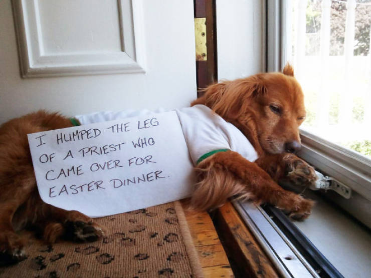 Dog Shaming Calendar Is What You Need To Get Ready For 2020