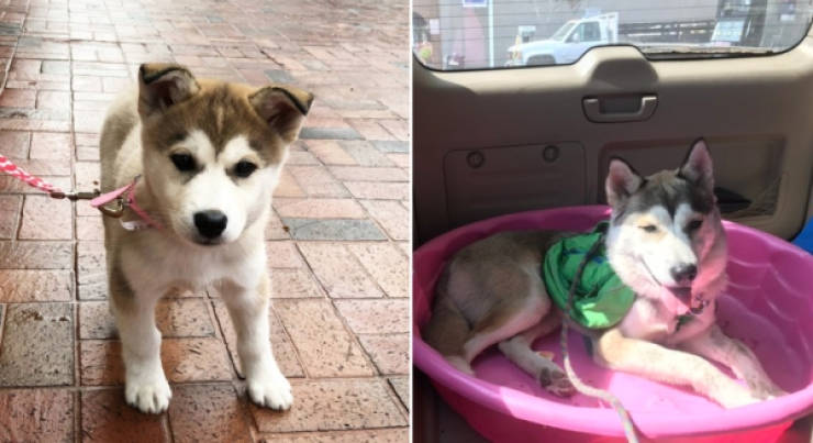 Dogs Are Adorable Both When They Are Young And When They Are Grown Up