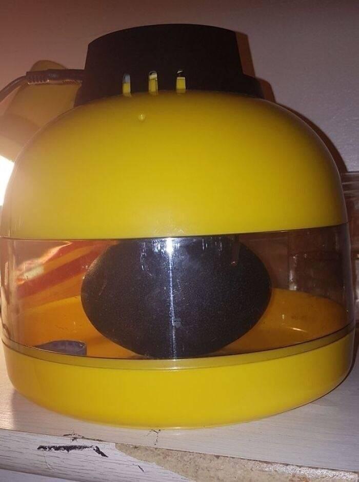 "Girl Buys A ""Dragon Egg"", Puts It In An Incubator"