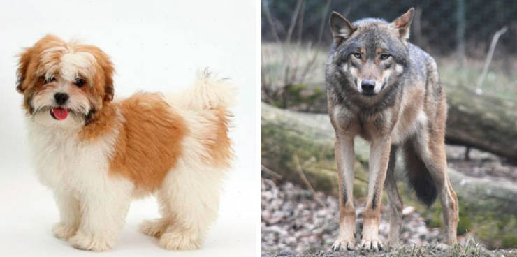 Genes Are Strange, And These Pairs Of Animals Are The Reason