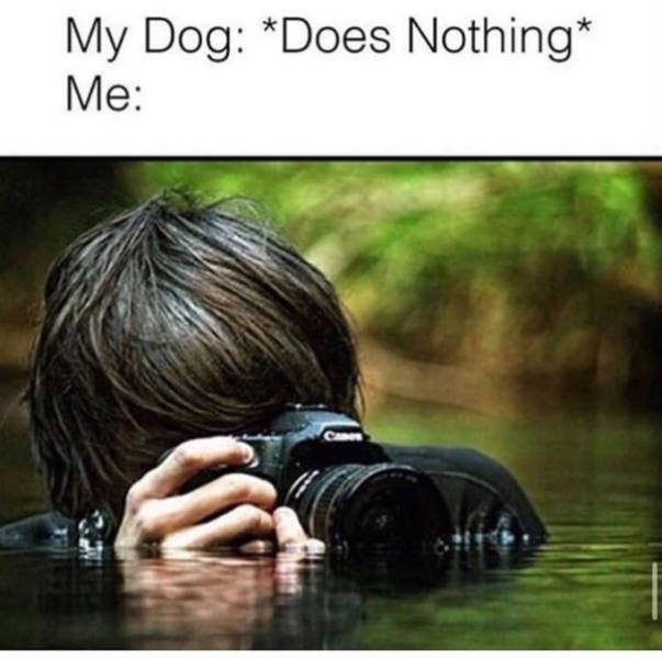 Pet Lovers Will Understand These Memes