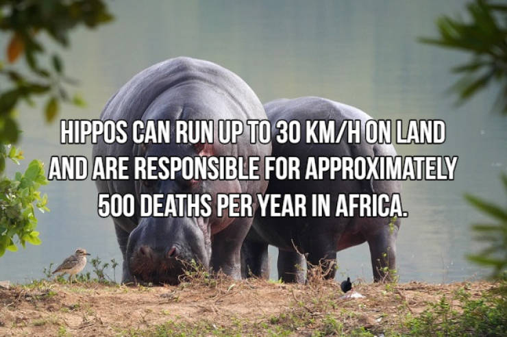 These Animals Are Not Playing Games With You!