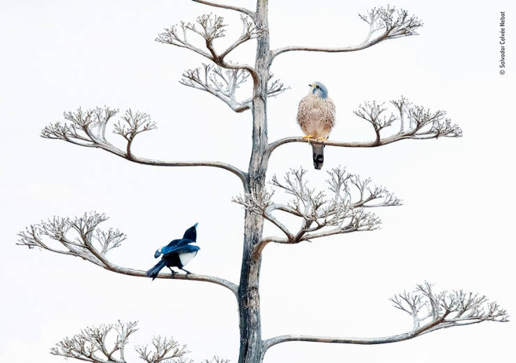 """""""Wildlife Photographer Of The Year"""" Announced Their People's Choice Award Finalists, And They Are Fantastic!"""