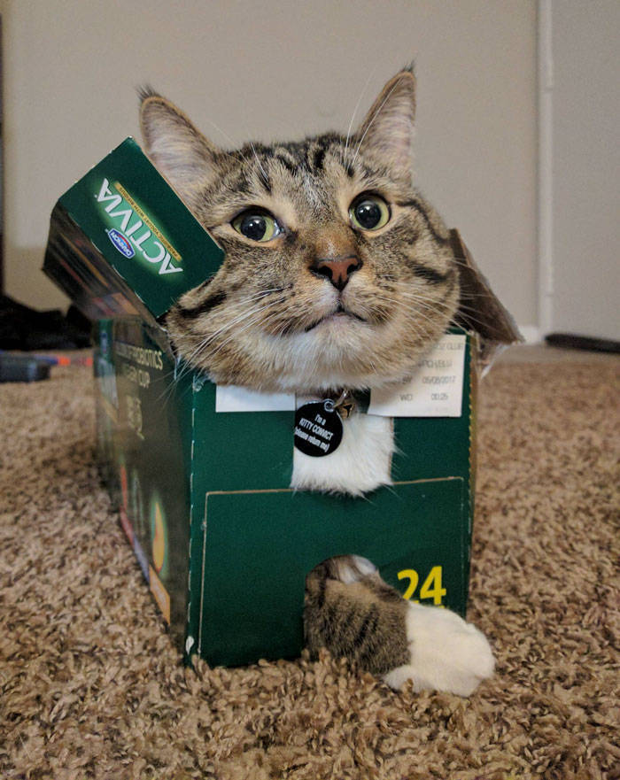 Science Found Out Why Cats Love Boxes So Much