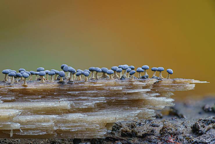 Macro Photos Show How Fascinating Can Mushrooms Be