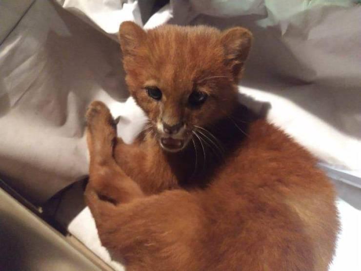 Well, It Looked Like A Kitten…