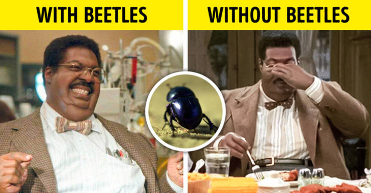 Imagine Our World Without Insects…
