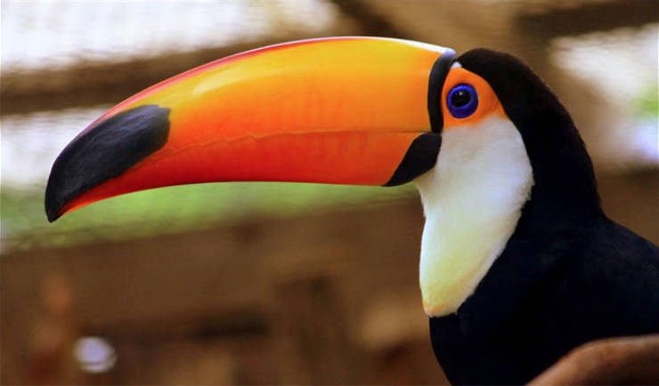 Why Are Toucans So Weird?!