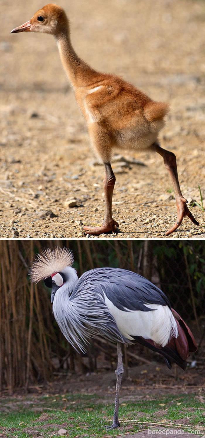 Birds As Babies And As Grown-Ups