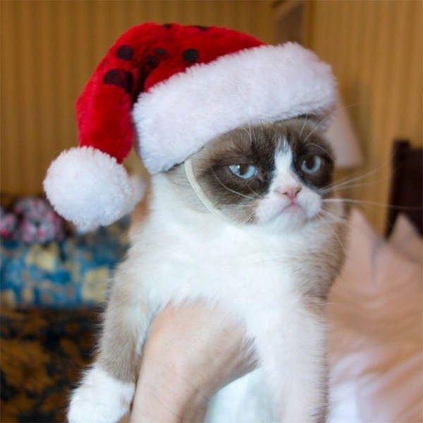These Pets Are Fed Up With All This Christmas Stuff…