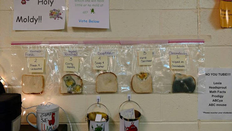 "School ""Moldy Bread"" Experiment Shows How Important It Is To Wash Your Hands"