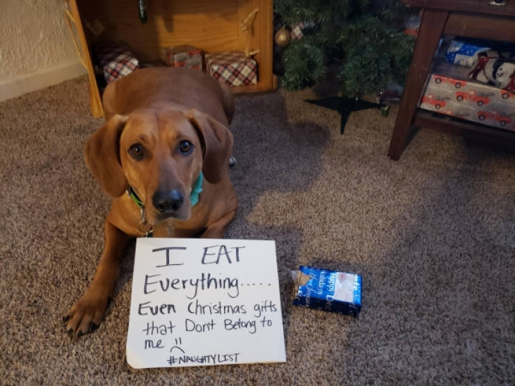 These Pets Deserved Their Share Of Shaming!