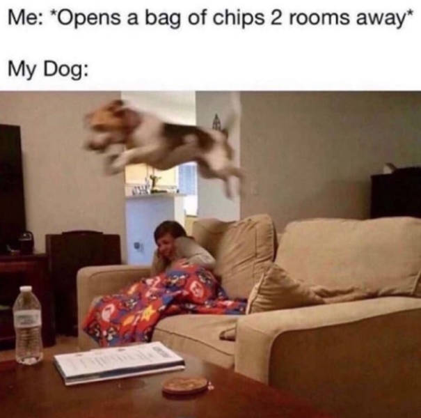 Dogs Will Appreciate These Memes