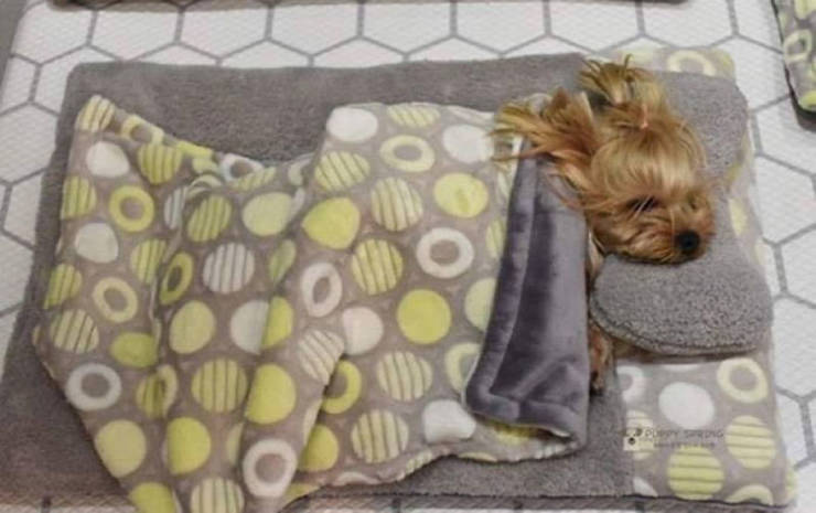 Photos Of Sleeping Pups In A Puppy Daycare Center Are Taking Over The Internet