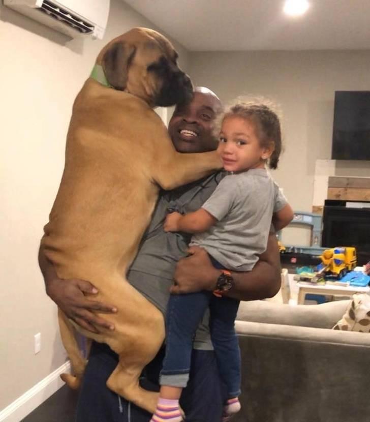 Those Dogs Are MASSIVE!