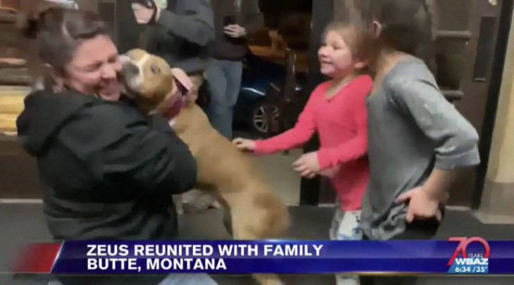 15 Volunteers Help To Get A Stolen Pit Bull Back To His Family