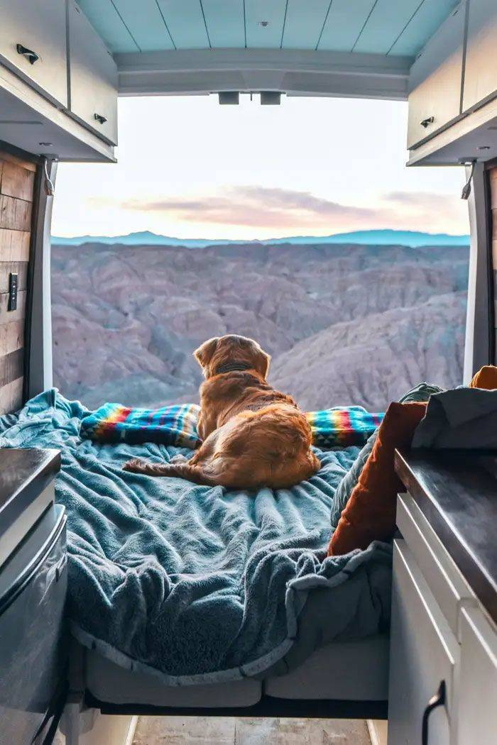 Girl Transforms Her Life To Travel With Her Dog And Live In A Van