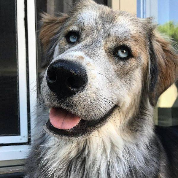 Mixed Dog Breeds Are Doubling The Cuteness!