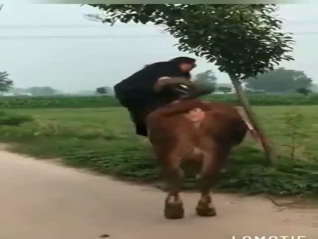 Forward, My Mighty Steed!