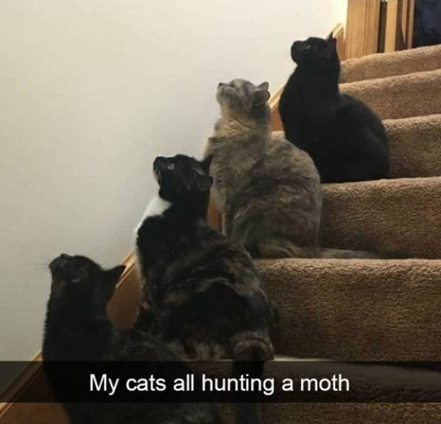 Cats Are Always Funny!