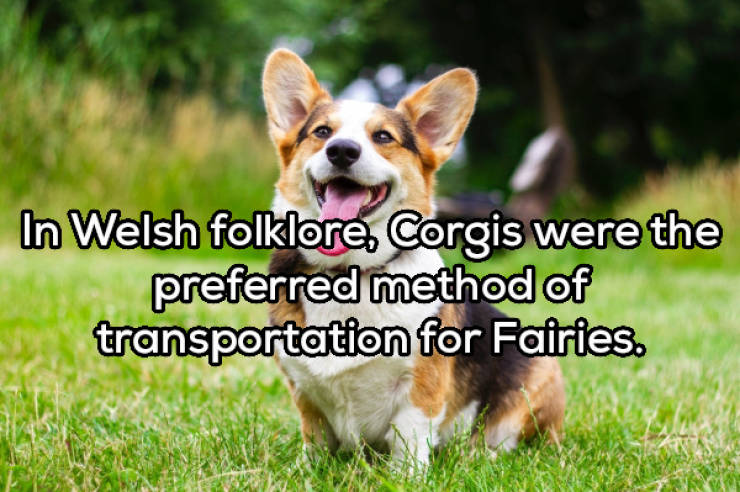 Don't Bark At These Dog Facts