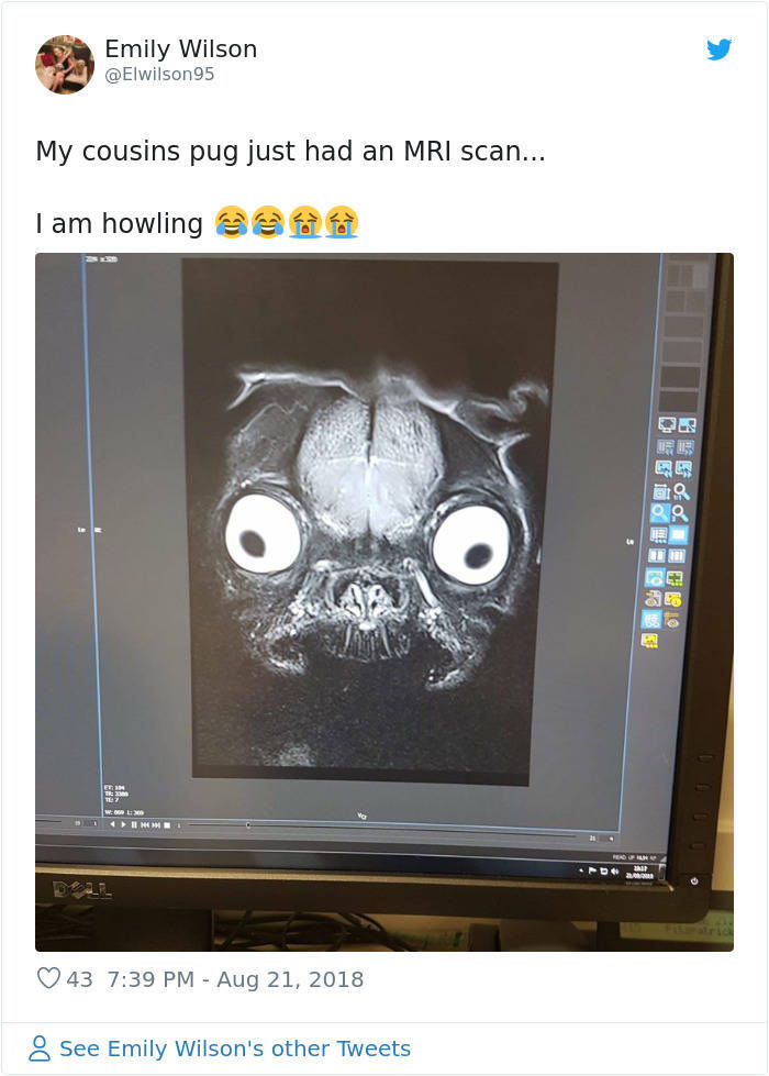 Pug's MRI Scan Is Not Very Adorable. To Say The Least.