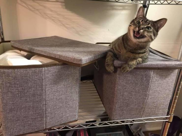 These Cats Will Show You Who's The Boss Here!