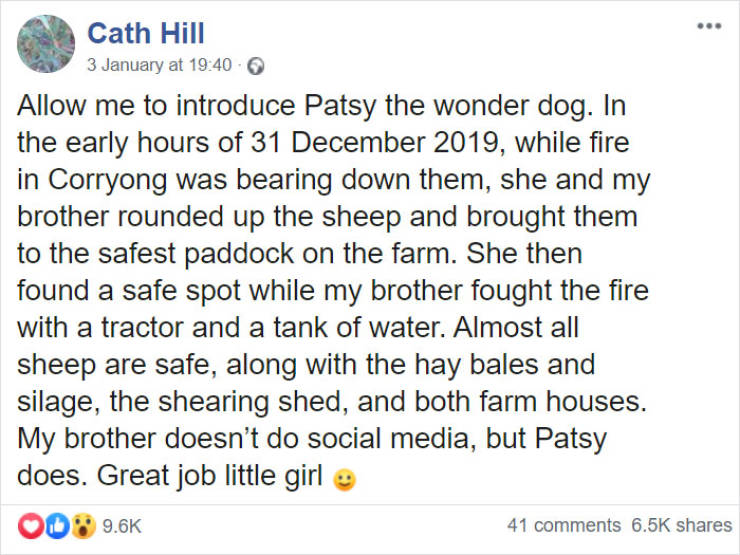 This Australian Dog Is A Hero!