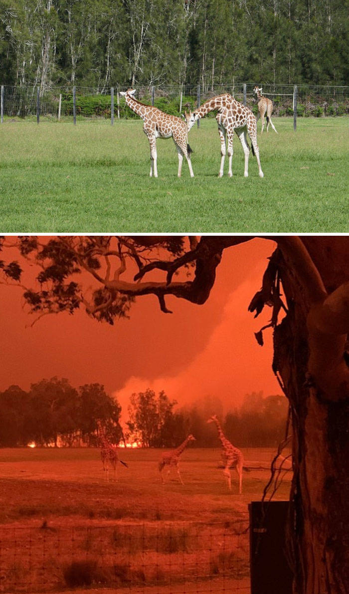 This Is How Brutal The Australian Bushfires Have Been Thus Far