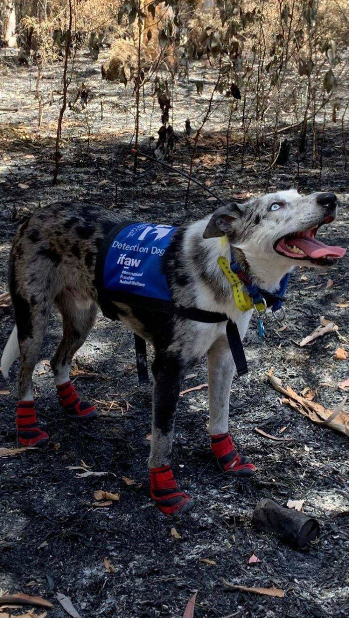 Here's How People Save Animals From The Australian Bushfires