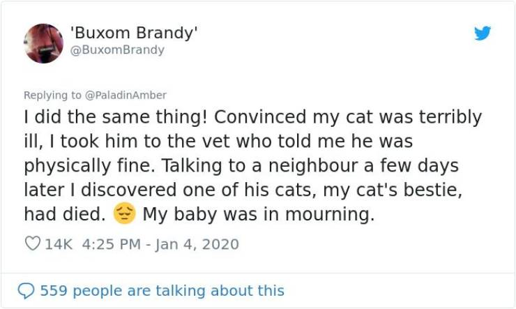 Owners Really Thought Their Pets Were Dying…