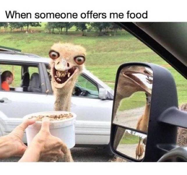 Sink Your Teeth Into These Food Memes!