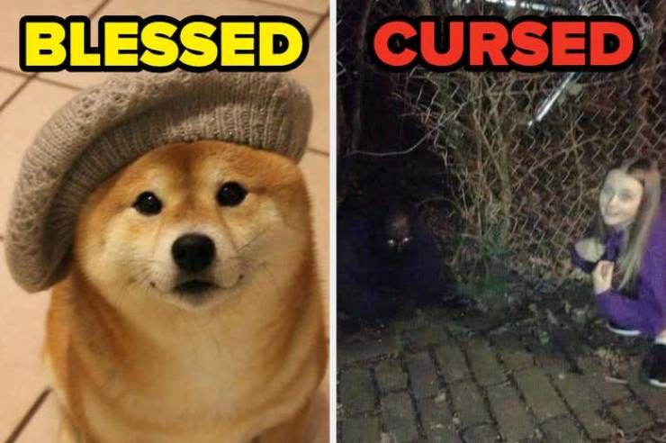 """Reddit Combines Blessed And Cursed Images Into """"Blursed"""" Ones"""