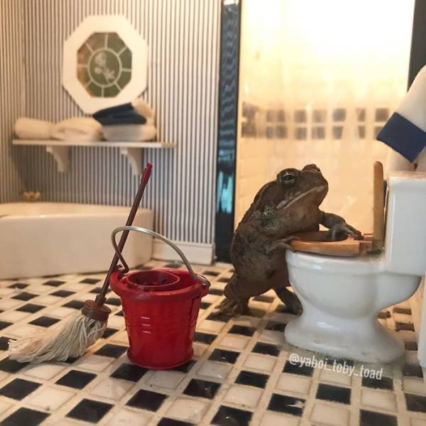 This Toad Is Almost Like A Human!