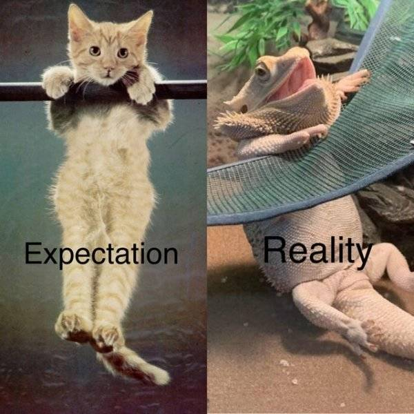 Expectations And Reality Don't Know Each Other…