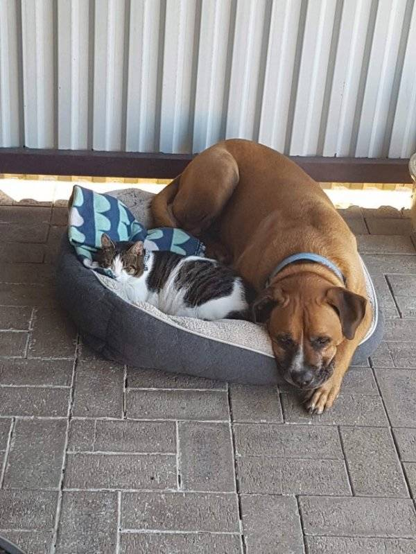 Animals Don't Care Who To Be Friends With
