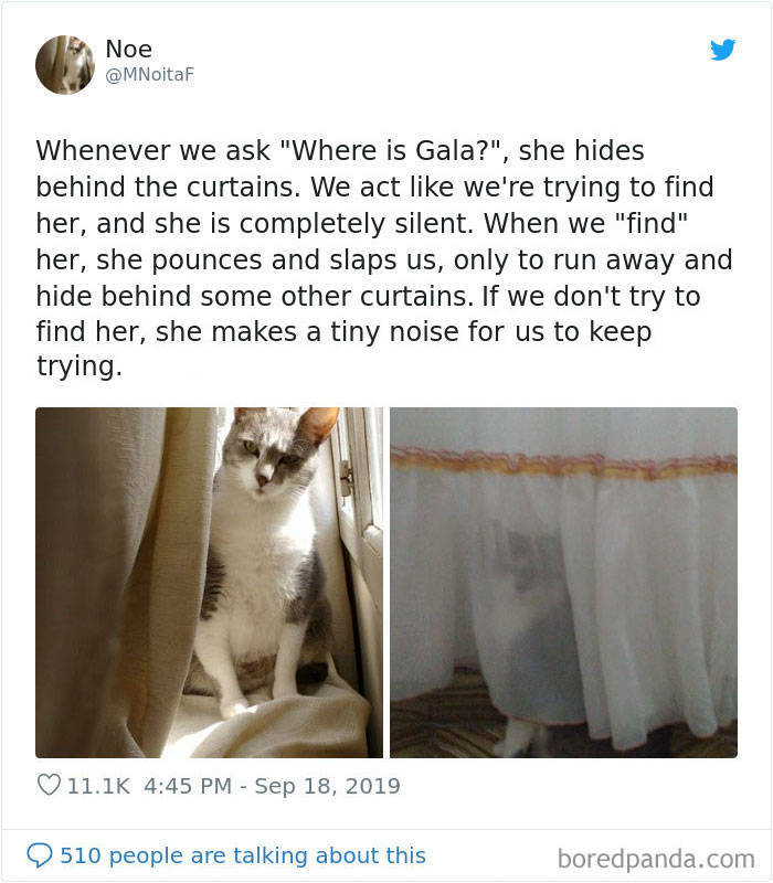 Cats Are NOT Normal!