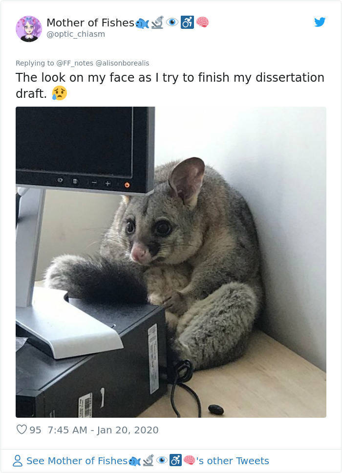 Possum Falls Into Someone's Office, Becomes A Meme