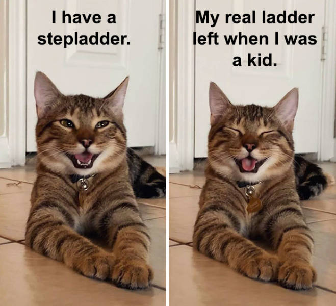 This Cat Is Now The Symbol Of Dad Jokes
